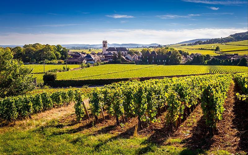 Village de Pommard  - Vignoble de la côte de Beaune