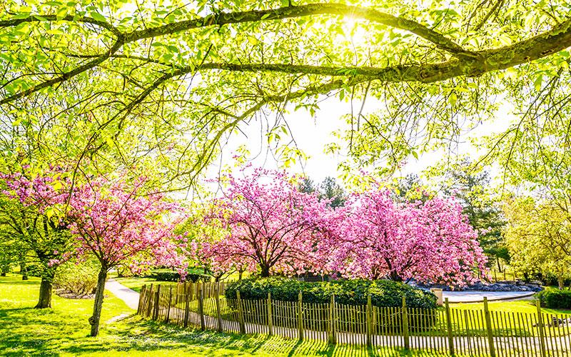 Parc du Tremblay à Champigny-sur-Marne