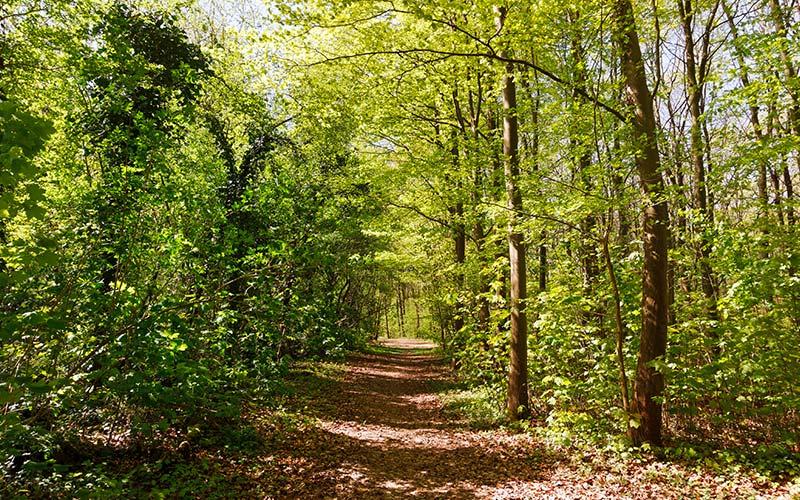 Forêt Domaniale de Palaiseau à proximité de Saclay