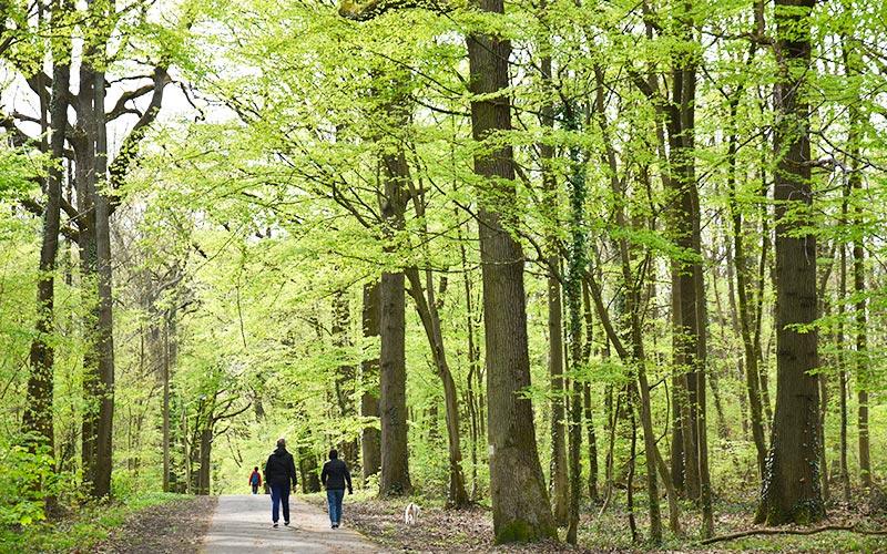 Balade dans la  forêt de Sarcelles et Ecouen